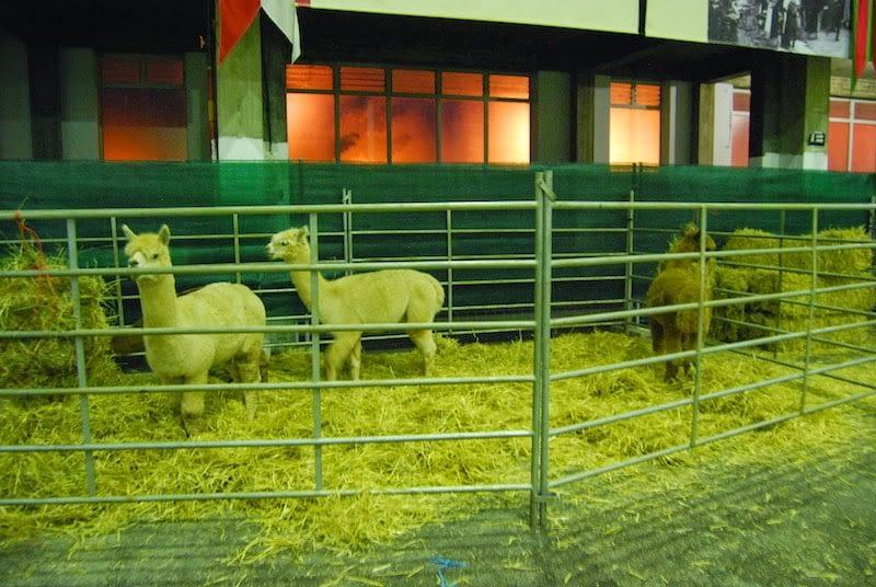 336.- Crónica 291ª kdda extra oficial (Sábado 15 y Domingo 16 de 2014) Fibratex Alpacan 2014